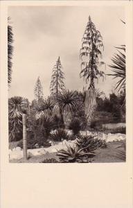 California San Marino Henry E Huntington Library And Art Gallery
