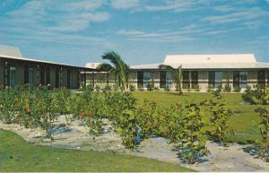 Flowers, Lucayan Marina, Lucaya/Freeport, Bahamas, Antilles, 40-60´s