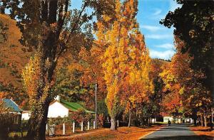 New Zealand Autumn Tints Arrowtown