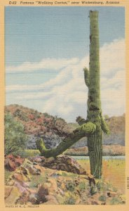 Walking Cactus , WICKENBURG , Arizona , 1930-40s