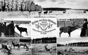 Bad Harzburg multiviews Basthirsche Ein Kranenkirsch, Antelope Forest Winter