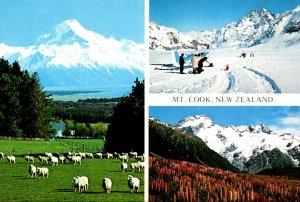 New Zealand Mt Cook & Glentanner Station Grazing Sheep Tasman Glacier and Mt ...