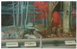 Postcard - The Bird & Game Building, Woodland Museum, Cooperstown, New York