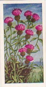 Glengettie Trade Card Wild Flowers No 25 Knapweed