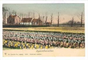 Hyacinthenvelden, Netherlands , 1890s-1905