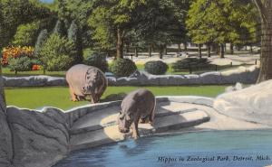 Detroit Michigan~Hippos In Zoological Park~1961 Postcard