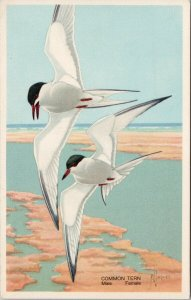Common Tern Birds In Flight America's Wildlife Resources FL Jaques Postcard G11