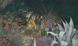 LA MORTOLA, Italy, 1940-60s; La Coin du Jardin, Agave Plant, Palm Tree