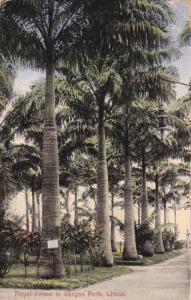 COSTA RICA , PU-1922 : Royal Palms in Vargas Park , LIMON