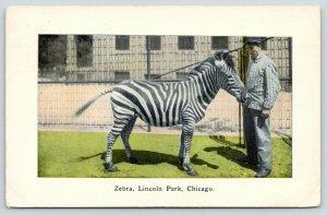 Chicago Illinois~Lincoln Park Zoo~Zebra Tries to Eat Man's Shirt~1910 Postcard