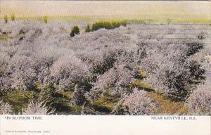 In Blossom Time, Near KENTVILLE, Nova Scotia, Canada, PU-1906