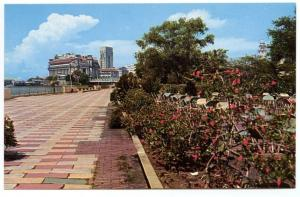 Elizabeth Walk Flowers Singapore China Publisher A.S.M.K. & Co. Postcard