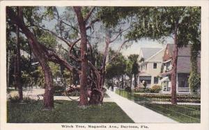 Witch Tree Magnolia Avenue Daytona Florida
