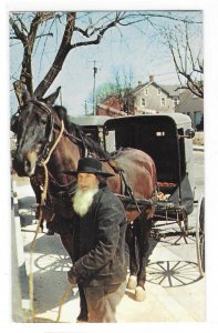 Amish Bishop Horse and Buggy Intercourse Pennsylvania Dutch Country Postcard