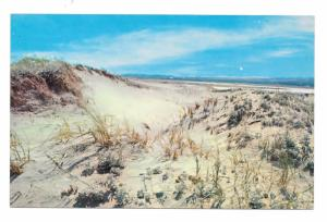 Cape Cod MA Sand Dunes Sandwich Beach Vintage Massachusetts Postcard