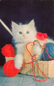 Cat Post Card, Cats Postcards Kitten with Yarn Unused