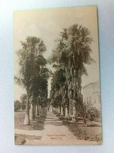 Vintage Postcard Royal Palm Walk Miami FL Florida