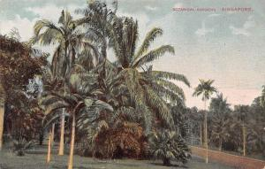 Singapore, Botanical Gardens, palm trees