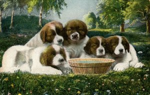 Five Puppies - Adorable!