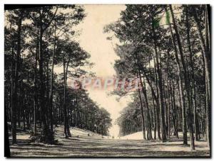 Old Postcard Arcachon La Foret
