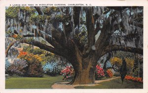 A Large Oak Tree in Middleton Gardens, Charlston, S.C., early postcard, used