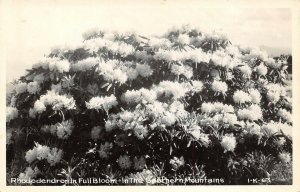 Vintage USA B&W RP Postcard, Rhododendron in Full Bloom, Southern Mountains BA0