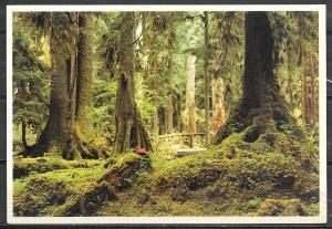 Washington, Rain Forest, Olympia National Park, unused