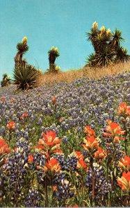 Texas Bluebonnets Indian Paintbrush and Giant Dagger Along Texas Highways