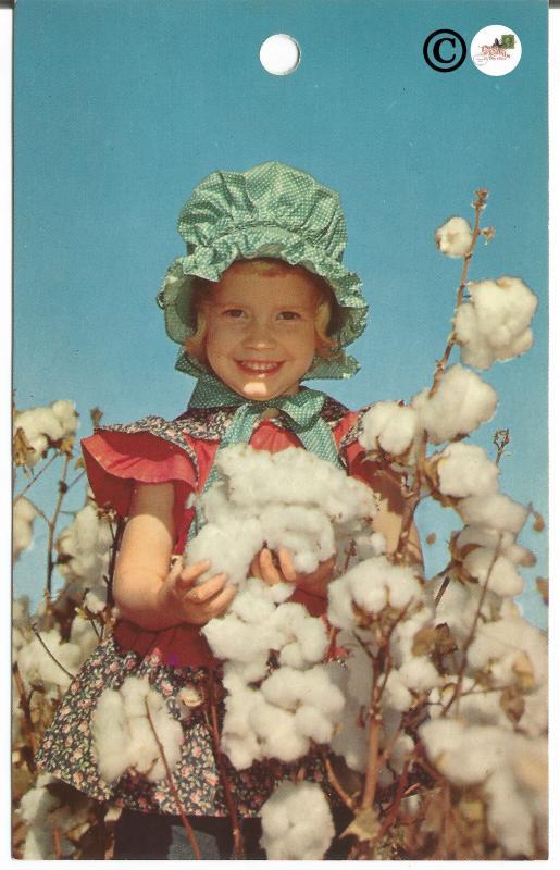 A Cotton Picker Dixie Cotton Boll Georgia Grown by Bob Taylor