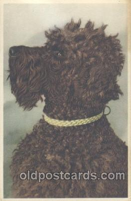 Dog Postcard Post Card Artist Alfred Mainzer Unused