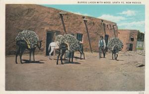 SANTA FE, New Mexico, 1910-1920s; Burros(Donkey) Laden with Wood