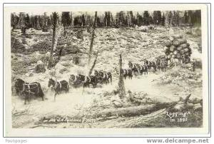 RPPC, Logging in 1895; Wagon Load of Logs Being Pulled by a Number of Horses