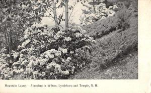 Wilton Lyndeboro and Temple New Hampshire Mountain Laurel antique pc ZA440268