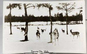 1950s A Group of Deer Traverse City MI Michigan Animals Real Photo Postcard
