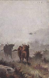 Cattle in the Highlands , TUCK # 9007 , Scotland , PU-1906