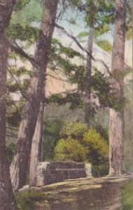 California Adams Springs along A Trail At Adams Springs Handcolored Albertype