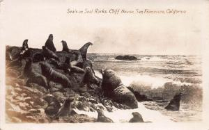 Seals on Seal Rocks, San Francisco, Early Real Photo Postcard, Unused