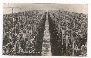 RP  Plantacoes de Ananazes, Azores, Portugal, 00-10s
