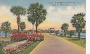 Florida Clearwater Glimpse Of Clearwater From Memorial Causeway 1959 Curteich