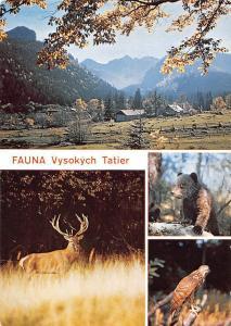 Slovakia Vysoke Tatry The High Tatras Jelen horny Cervus Elaphus Bear