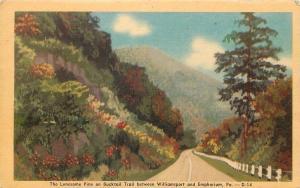 Williamsport-Emphorium Pennsylvania~Lonesome Pine on Bucktail Trail Hwy~1940s