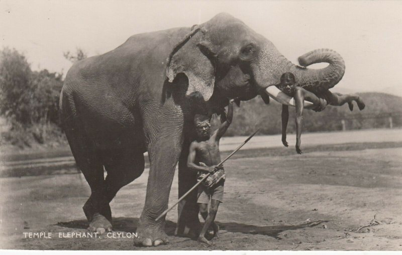 RP: Temple Elephant , CEYLON , 30-50s