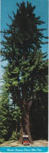 Chandelier Drive-thru Tree, California, 50-70s