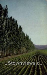 Salinas Valley's