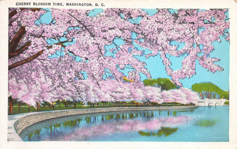 Cherry Blossom Time, Washington, D.C., Early Postcard, Unused