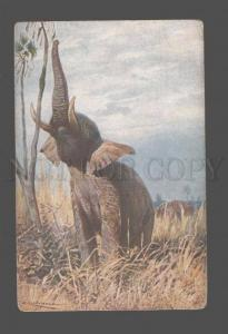 079309 ELEPHANT Elephas africanus Vintage color PC