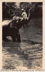 Ceylon Elephant Bathing Dambulla Postcard
