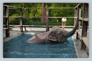 Toledo OH-Ohio, Toots Baby Elephant Bathing, Zoological Park, Linen Postcard