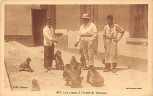 Wild Animals Fauna: Les singes a l'Hotel du Ruisseau, monkeys, apes