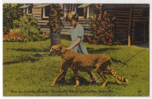 Kali, Cheetah, Thunderbird Indian Trading Post, Dania FL